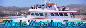 Newport Landing Whale Watching Tours. [Photo Credit: Newport Landing Whale Watching Tours]