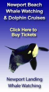 Newport Landing Whale Watching Tours