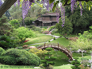 Created in 1912, the Japanese Garden features a pond spanned by a moon bridge, a traditional Japanese house and ceremonial teahouse, bonsai courts, a Zen garden, and trellises of wisteria that bloom in early spring. [Photo Credit: The Huntington Library, Art Collections, and Botanical Gardens]