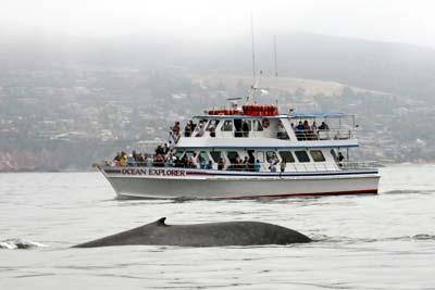 Newport Landing Whale Watching in Newport Beach, California. [Photo Credit: Newport Landing Whale Watching]