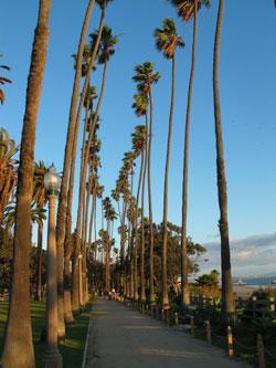 Palm Trees at Palisades Park. [Photo Credit: LAtourist.com]